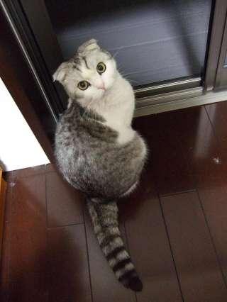 見返り「美猫」?!