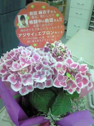私を花に例えると・・・?