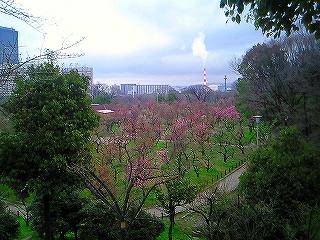 先週は「梅の花」がきれいでした