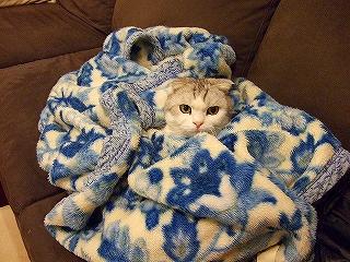 疾風と毛布