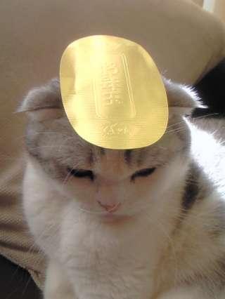「猫に小判」