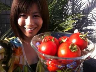 トマト収穫~♪