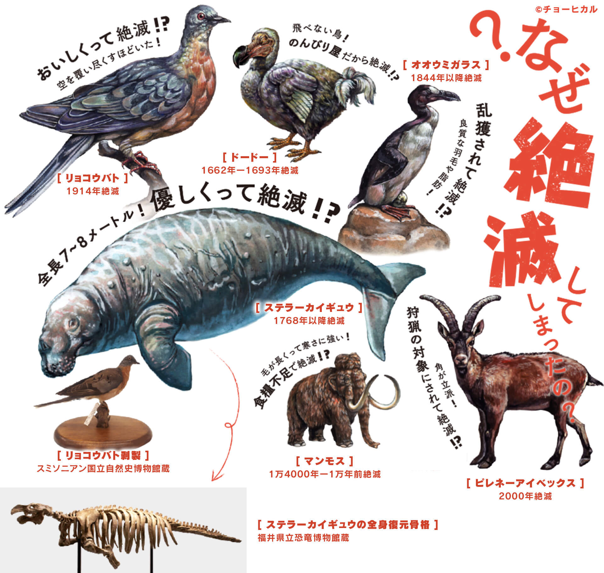 見どころ:特別展「絶滅動物研究所」:中京テレビ